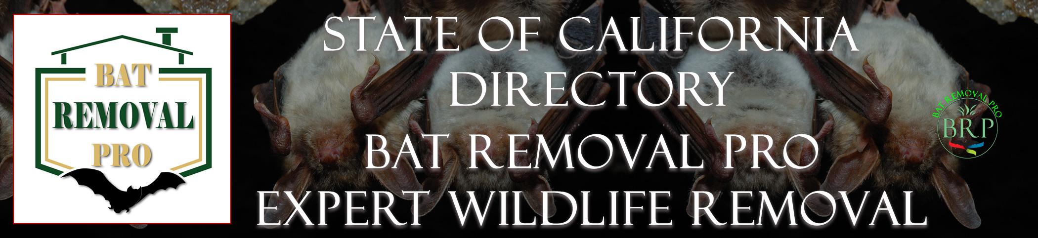 california-bat-removal-at-bat-removal-pro-header-image