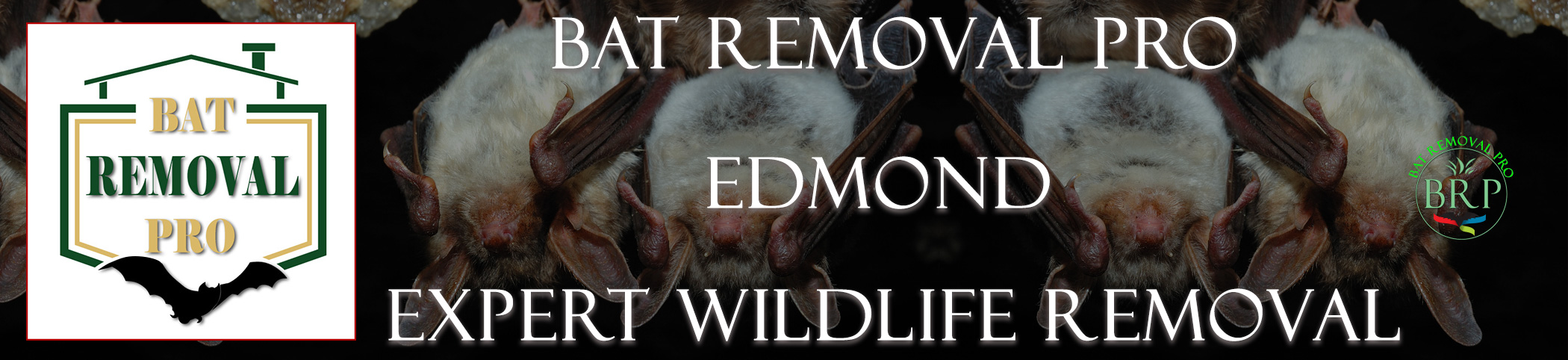EDMOND-bat-removal-at-bat-removal-pro-header-image