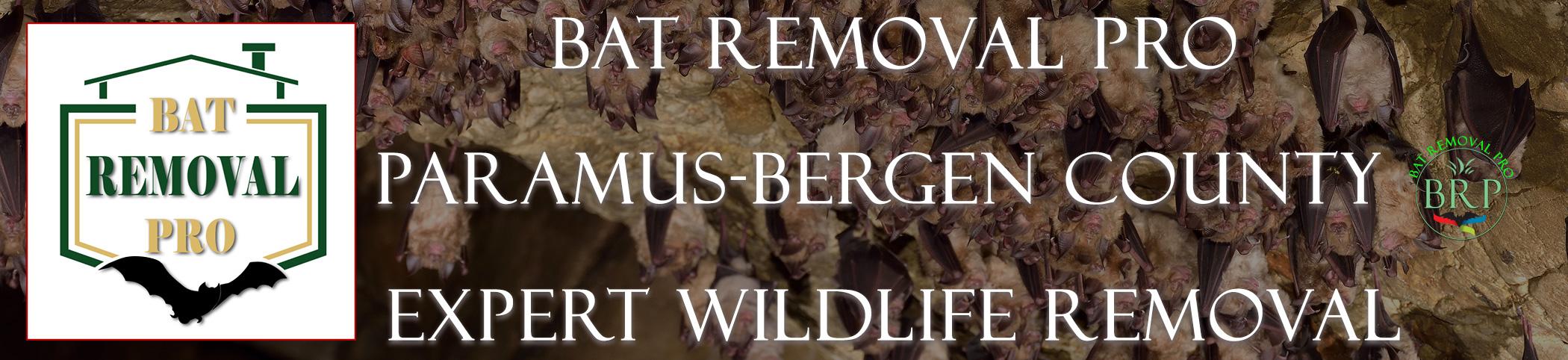 PARAMUS-bat-removal-at-bat-removal-pro-header-image
