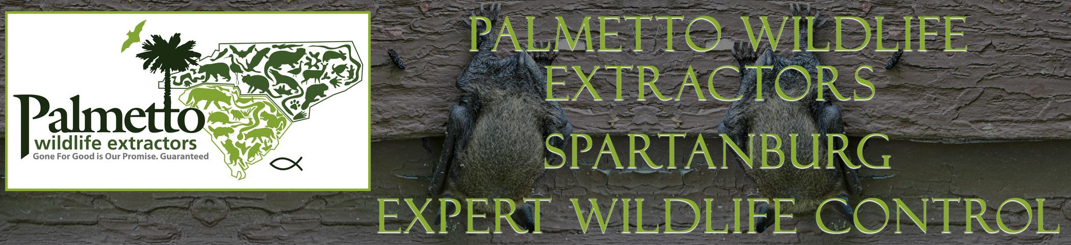 Palmetto Wildlife Extractors spartanburg south carolina header image