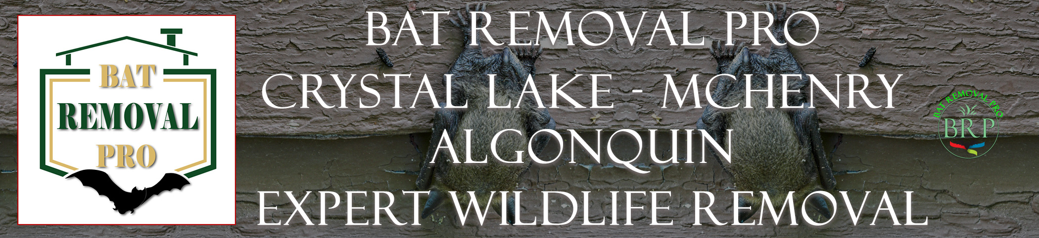 CRYSTAL-LAKE-bat-removal-at-bat-removal-pro-header-image