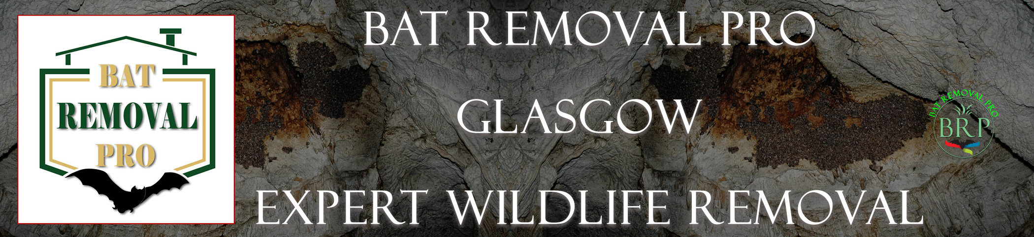GLASGOW-bat-removal-at-bat-removal-pro-header-image