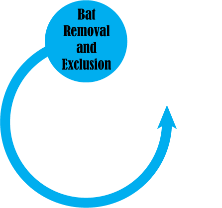 Bat Removal Pro - Directory of Bat Removal Professionals - Services We Offer