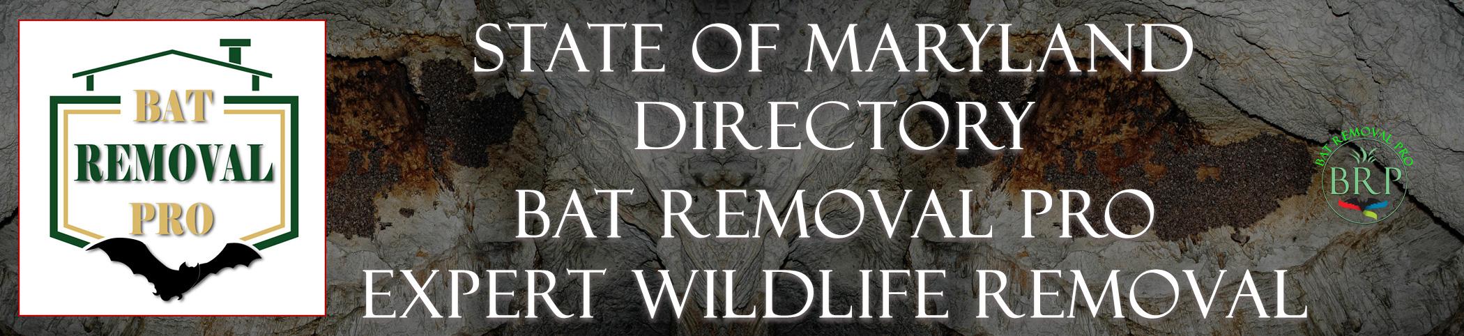 maryland-bat-removal-at-bat-removal-pro-header-image