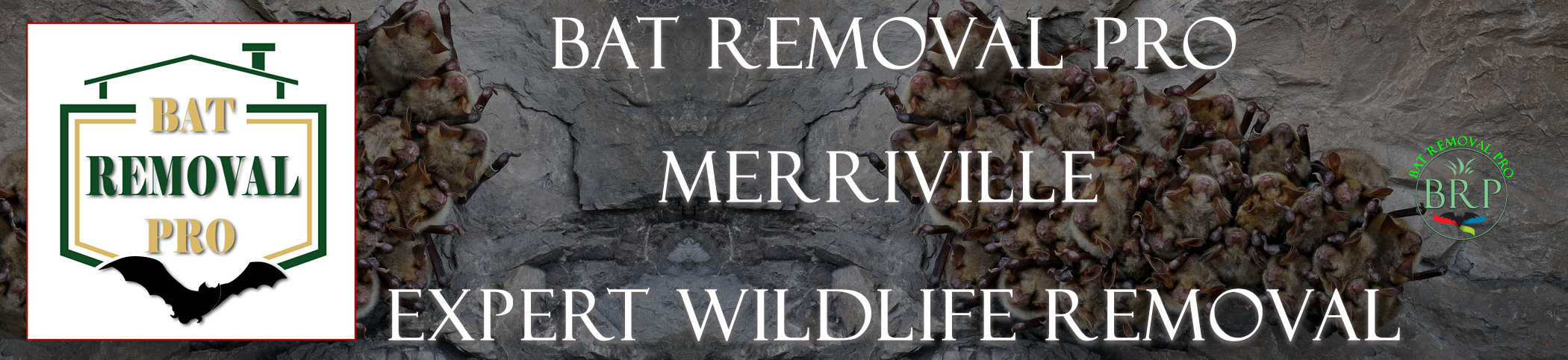 bat removal merrillville indiana exclusion of bats in homes and