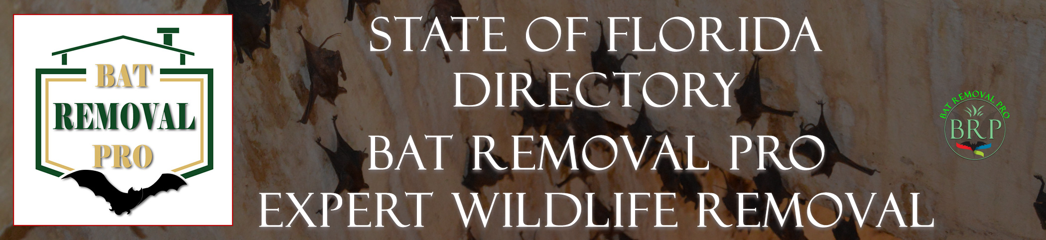 florida-bat-removal-at-bat-removal-pro-header-image