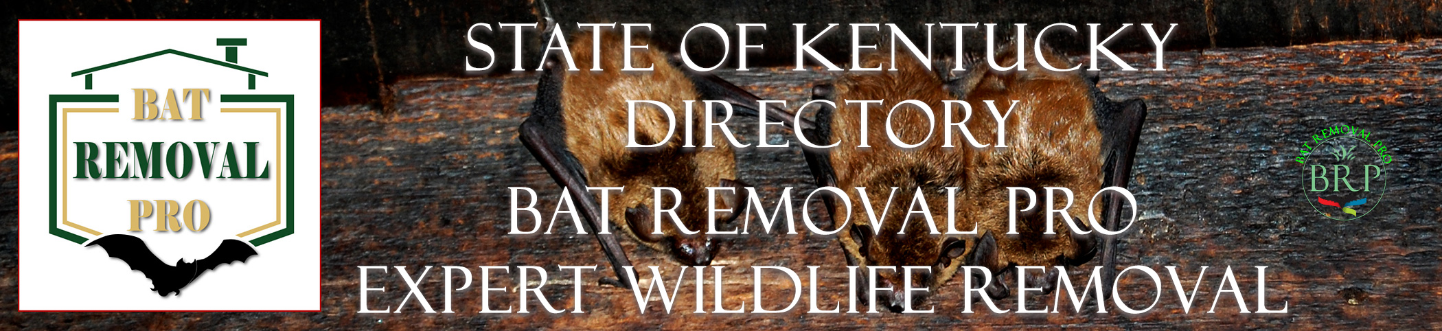 kentucky-bat-removal-at-bat-removal-pro-header-image