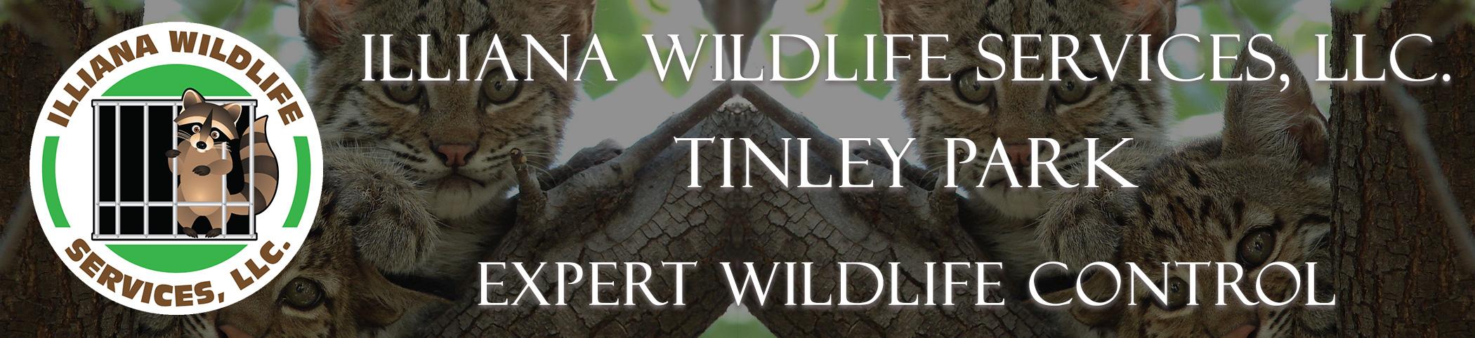 illianna wildlife services LLC tinley park illinois header image