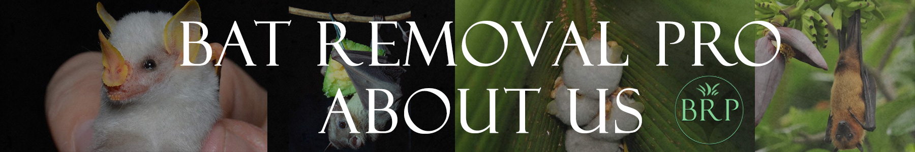 Bat Removal Pro - Directory of Bat Removal Professionals - About Us Page