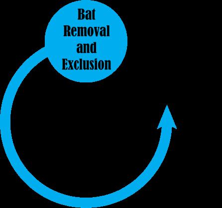 bat removal pro circle with bat badge
