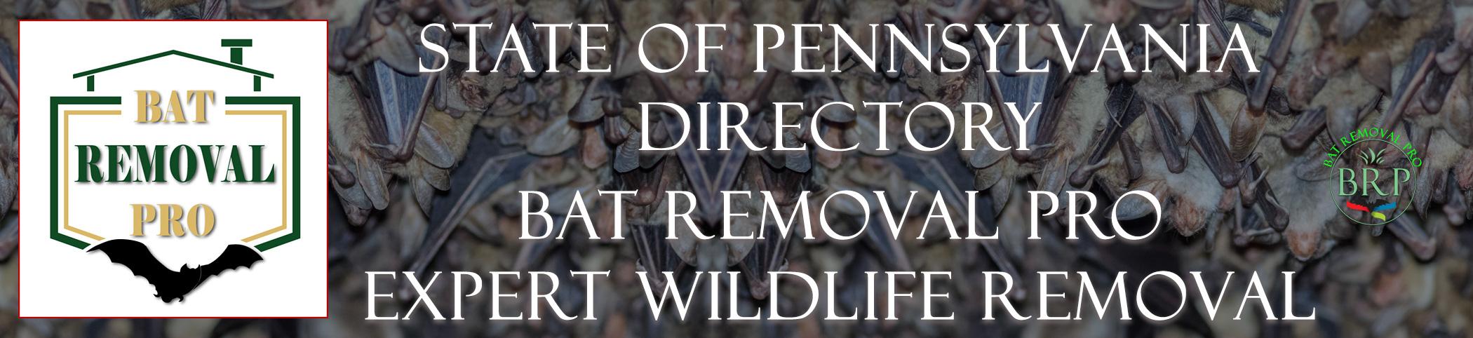 PENNSYLVANIA-bat-removal-at-bat-removal-pro-header-image