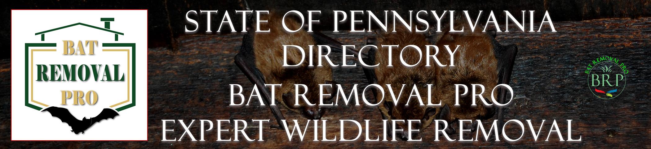 pennsylvania  header image at bat removal pro