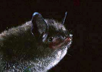 evening bat at bat removal pro national directory