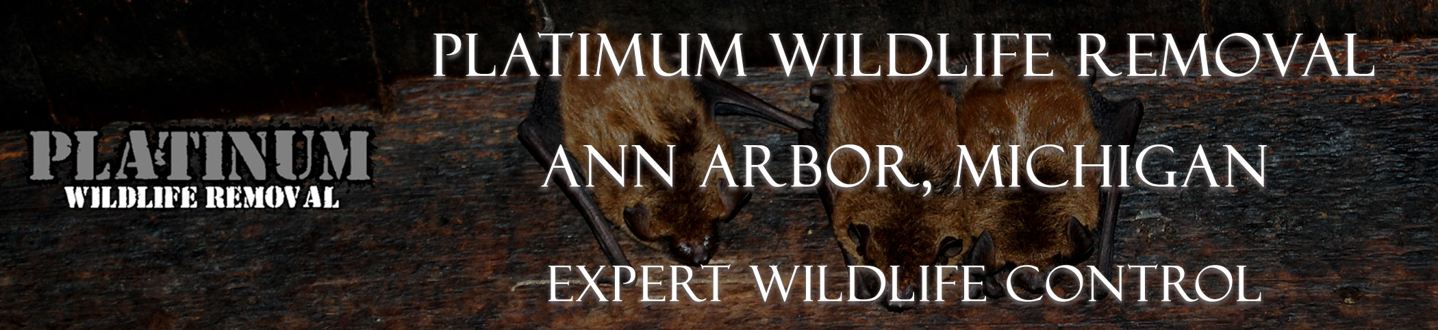 Ann-Arbor-Platinum-Wildlife-Removal_michgan