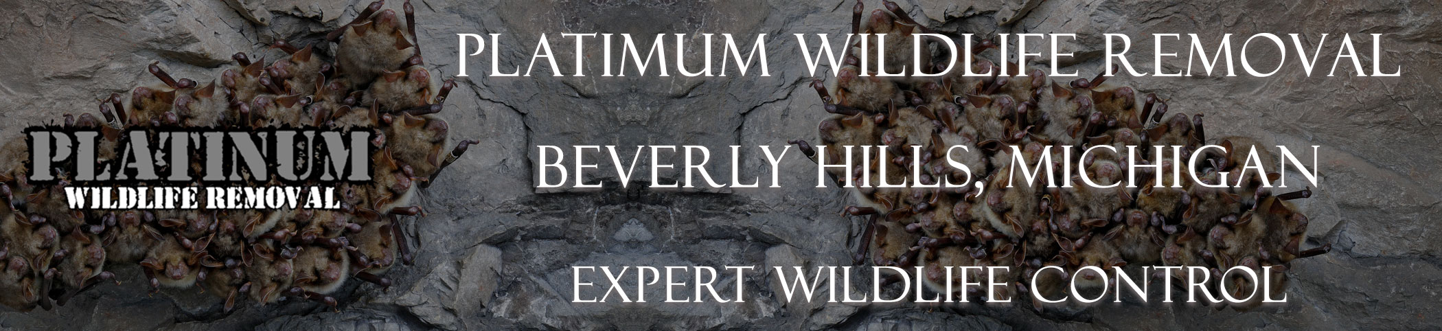 Beverly-Hills-Platinum-Wildlife-Removal-michgan