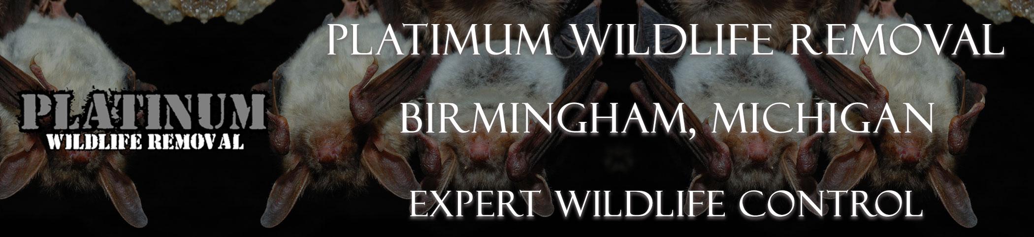 Birmingham-Platinum-Wildlife-Removal-michgan