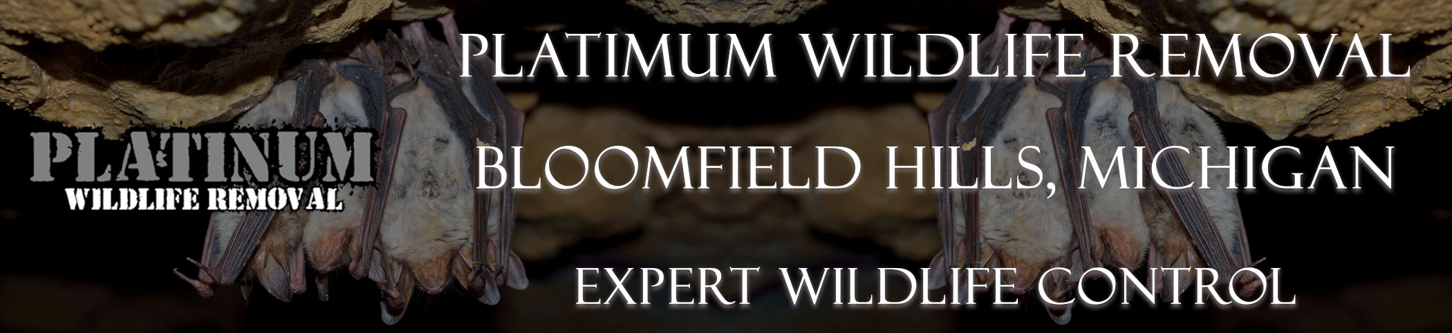 Bloomfield-Hills-Platinum-Wildlife-Removal-michgan