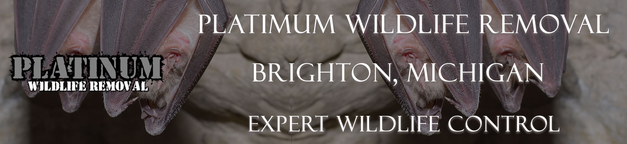 Brighton-Platinum-Wildlife-Removal-michgan