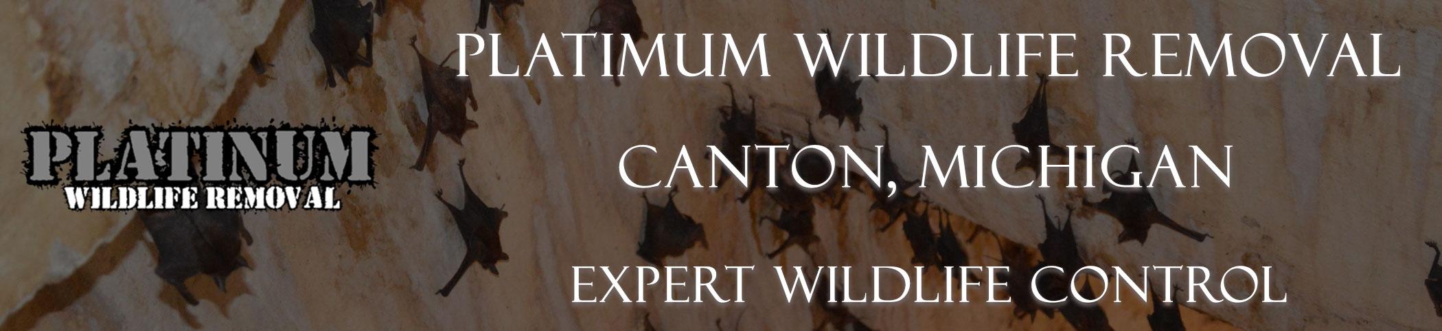 Canton-Platinum-Wildlife-Removal-michgan