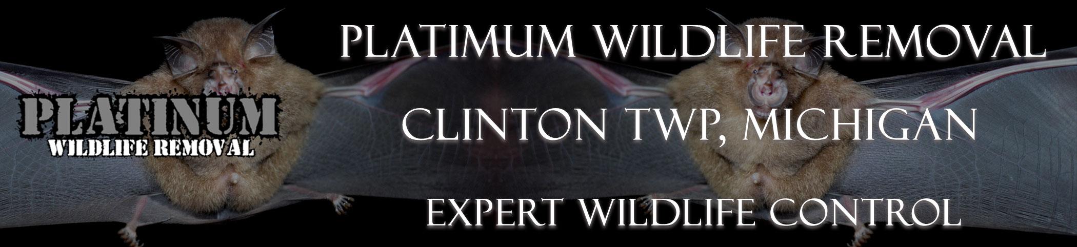 Clinton-TWP-Platinum-Wildlife-Removal-michgan