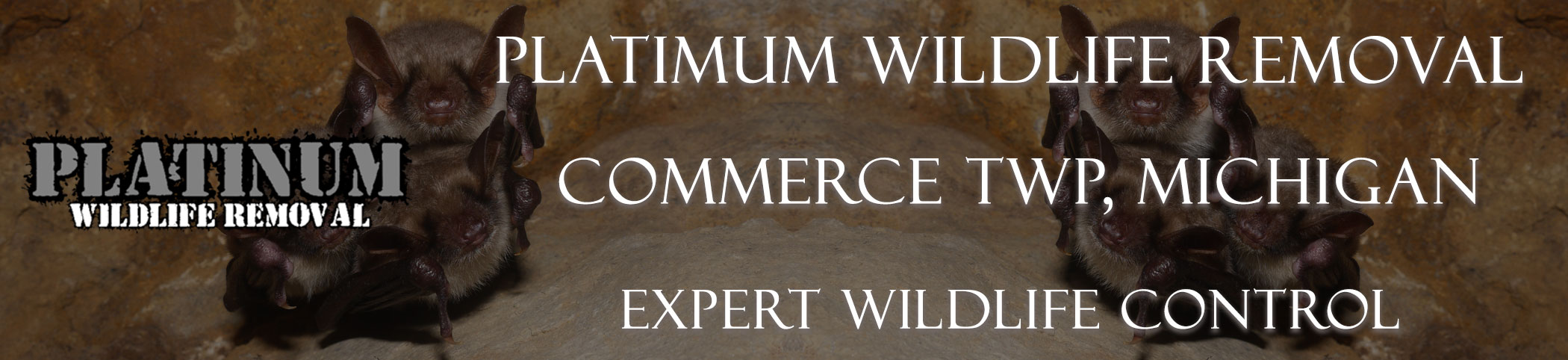 Commerce-TWP-Platinum-Wildlife-Removal-michgan