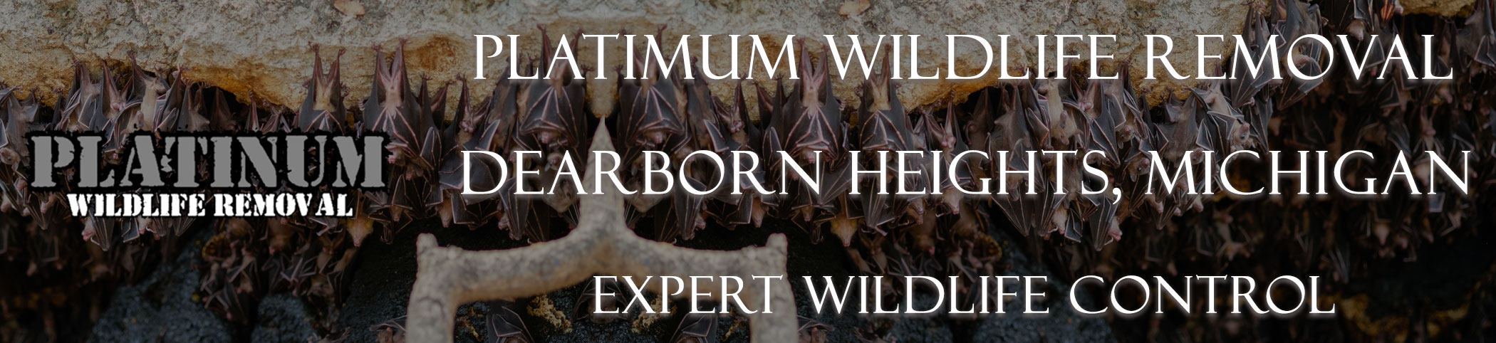Dearborn-Heights-Platinum-Wildlife-Removal-michgan