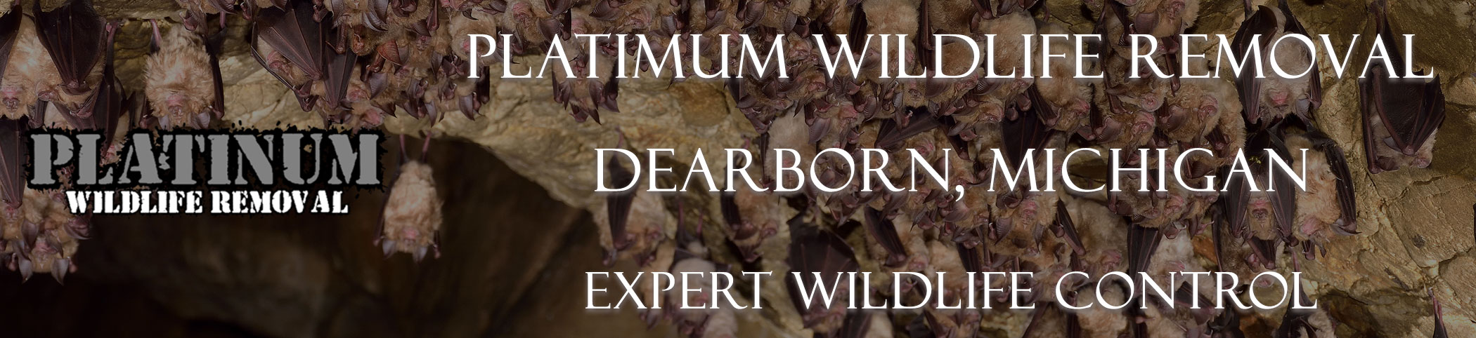 Dearborn-Platinum-Wildlife-Removal-michgan