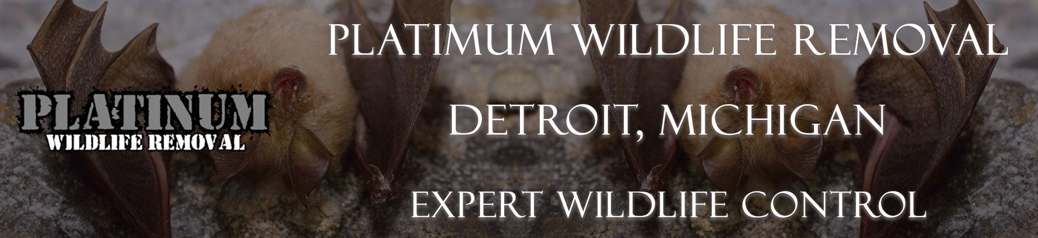 Detroit-Platinum-Wildlife-Removal-michgan