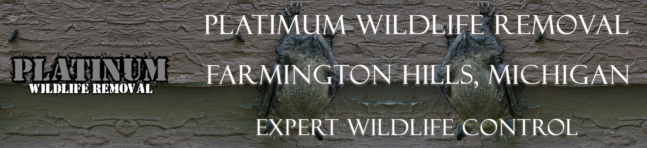 Farmington-Hills-Platinum-Wildlife-Removal-michgan