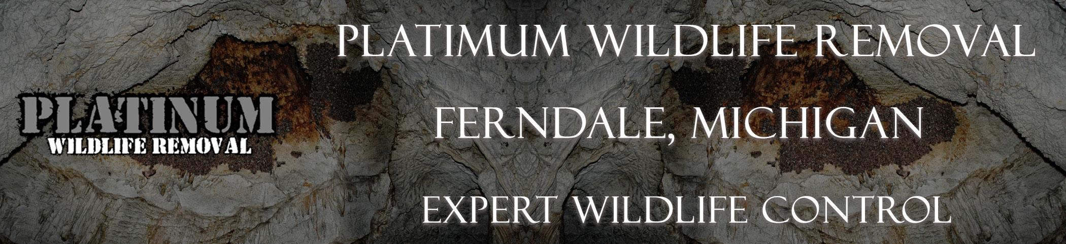 Ferndale-Platinum-Wildlife-Removal-michgan