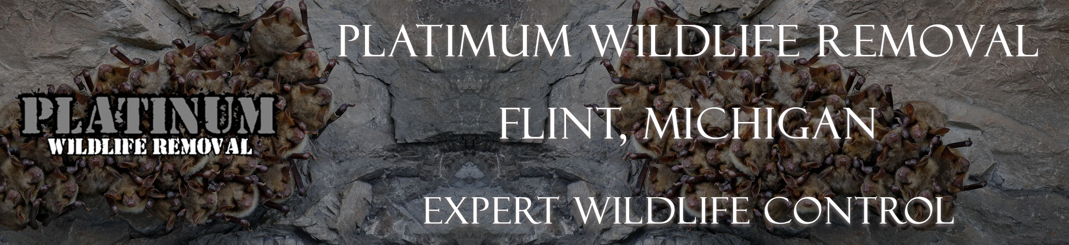 Flint-Platinum-Wildlife-Removal-michgan
