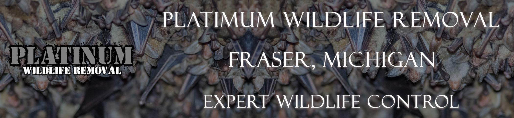Fraser-Platinum-Wildlife-Removal-michgan