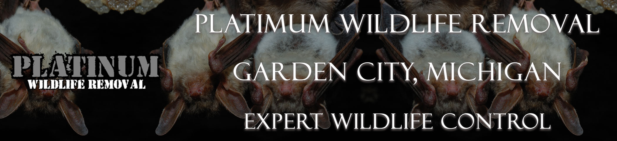 Garden-City-Platinum-Wildlife-Removal-michgan