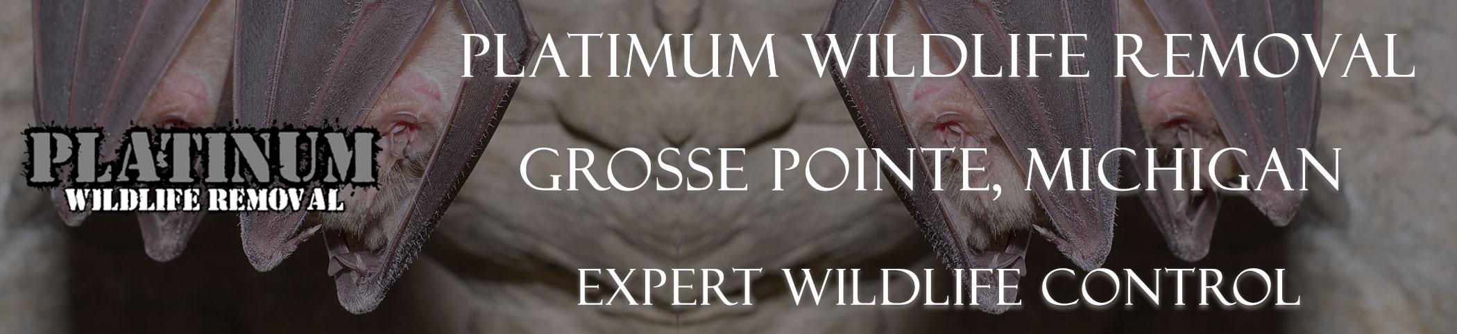 Grosse-Pointe-Platinum-Wildlife-Removal-michgan