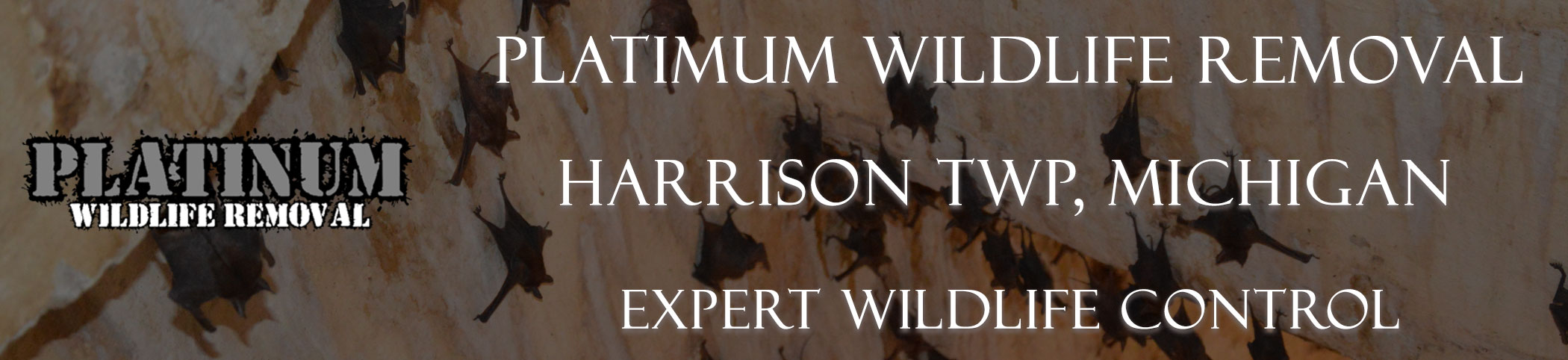 Harrison-TWP-Platinum-Wildlife-Removal-michgan