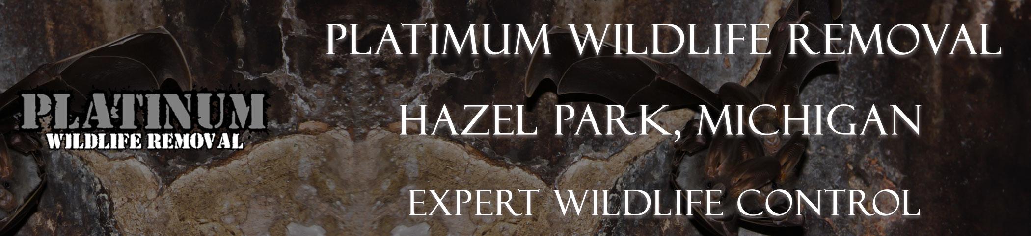 Hazel-Park-Platinum-Wildlife-Removal-michgan