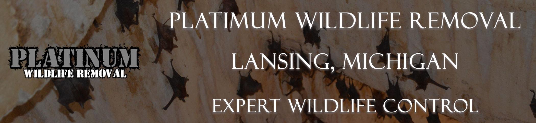 Lansing-Platinum-Wildlife-Removal-michgan