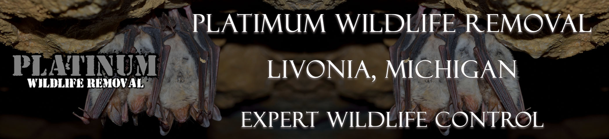 Livonia-Platinum-Wildlife-Removal-michgan