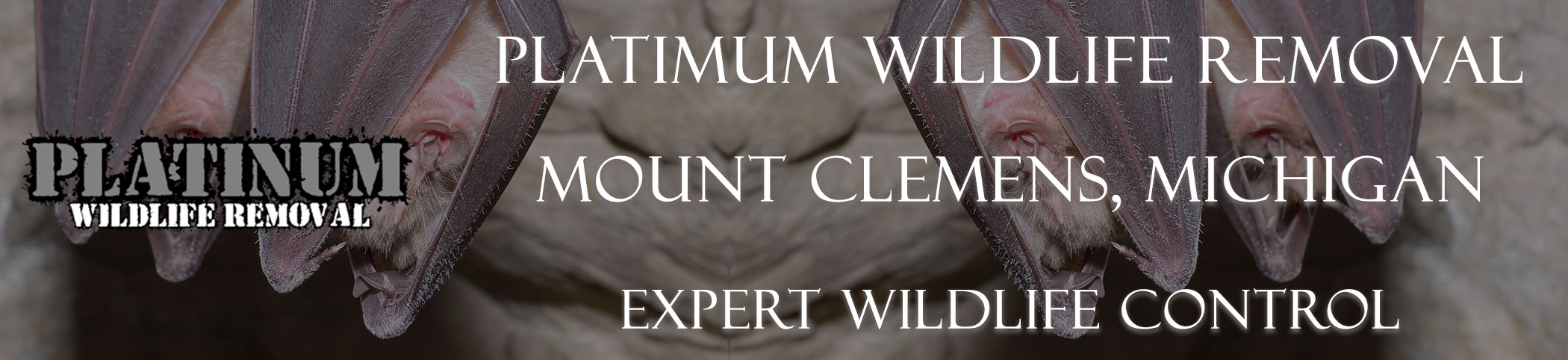 Mount-Clemens-Platinum-Wildlife-Removal-michgan