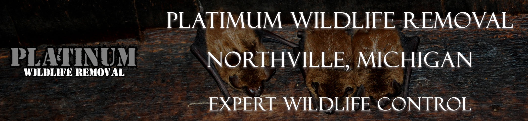 Northville-Platinum-Wildlife-Removal-michgan