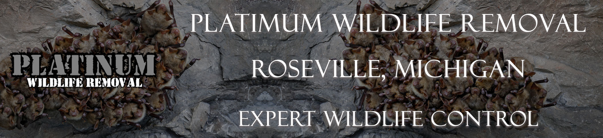 Roseville-Platinum-Wildlife-Removal-michgan