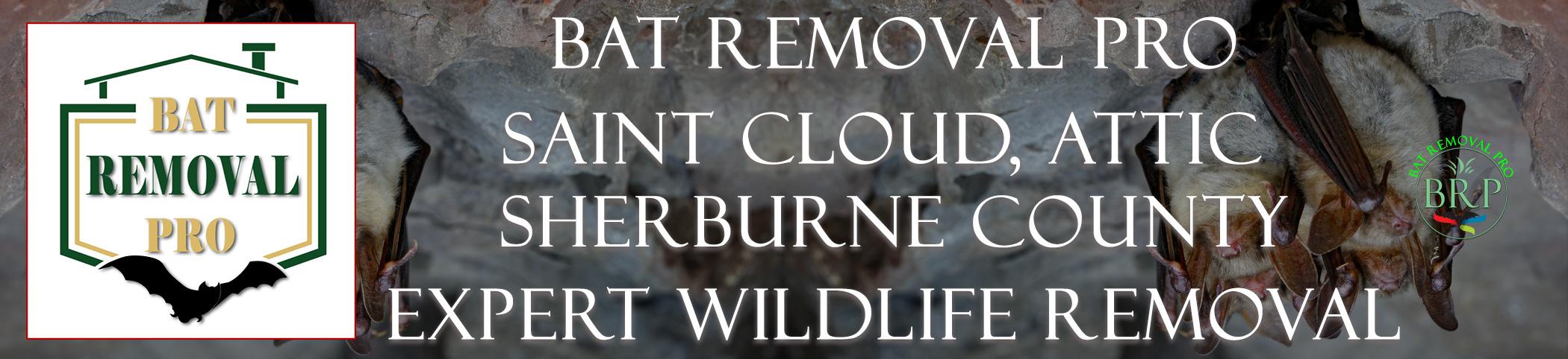 saintcloud_attic_sherburne_county_minnesota header image at bat removal pro