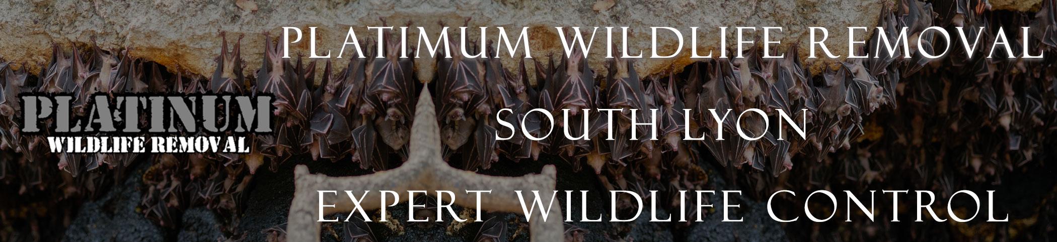 south_lyon_mich header image at bat removal pro