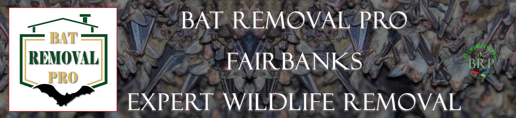 fairbanks_alaska_HEADER_IMAGE bat removal pro