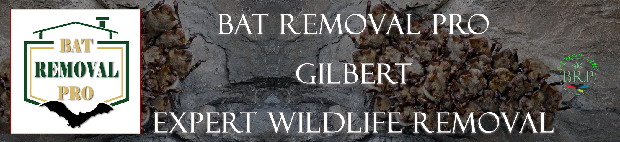 gilbert_arizona_HEADER_IMAGE bat removal pro