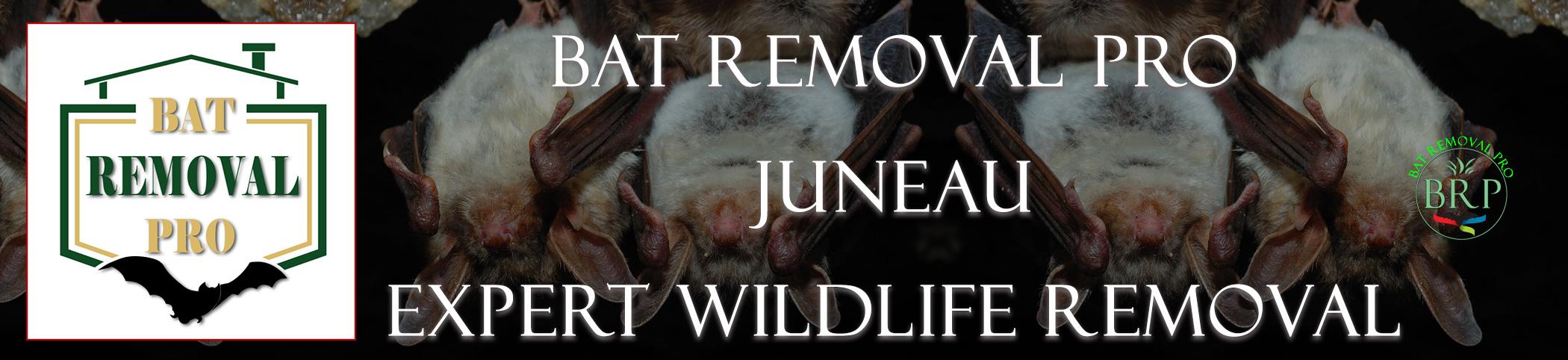 juneau_alaska_HEADER_IMAGE bat removal pro