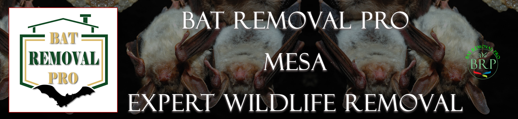 Mesa_arizona_HEADER_IMAGE bat removal pro