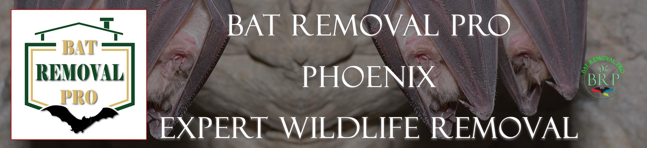 Phoenix_arizona_HEADER_IMAGE bat removal pro