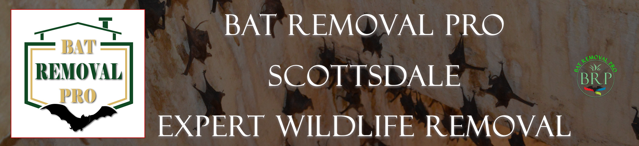 scottsdale_arizona_HEADER_IMAGE bat removal pro
