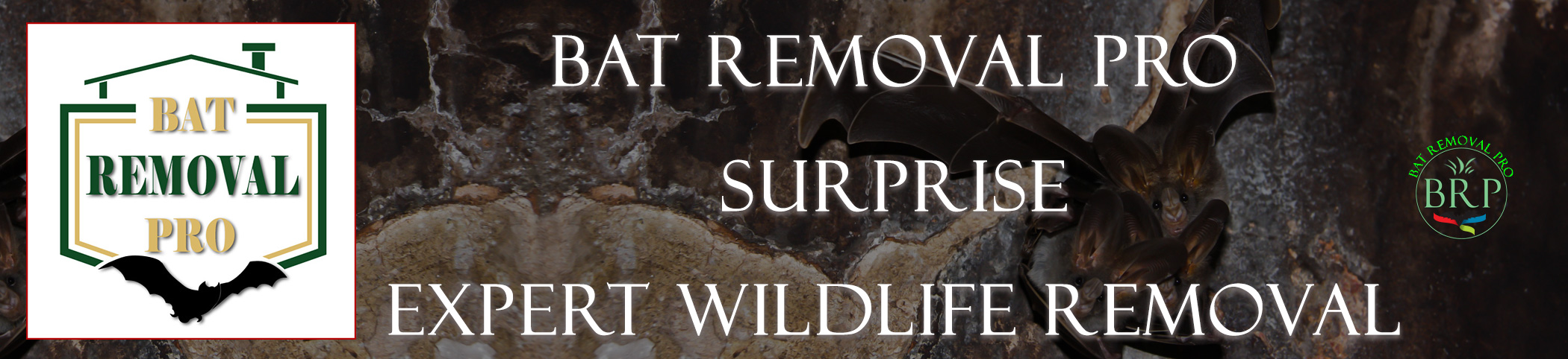 surprise_arizona_HEADER_IMAGE bat removal pro